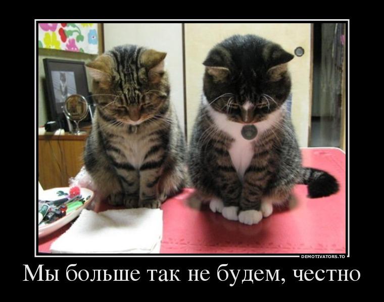 41402843_myi-bolshe-tak-ne-budem-chestno.jpg